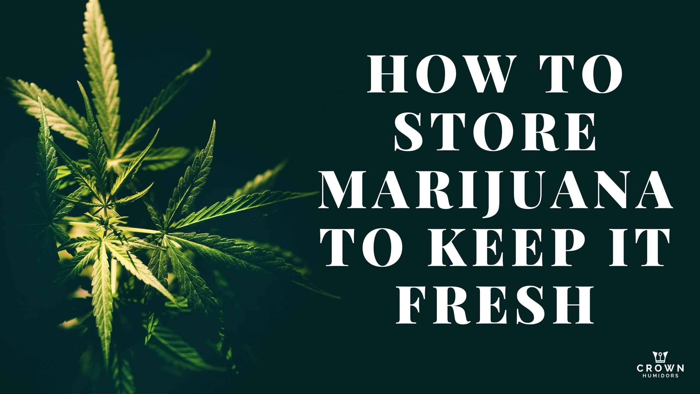 How to Store Marijuana to keep it fresh